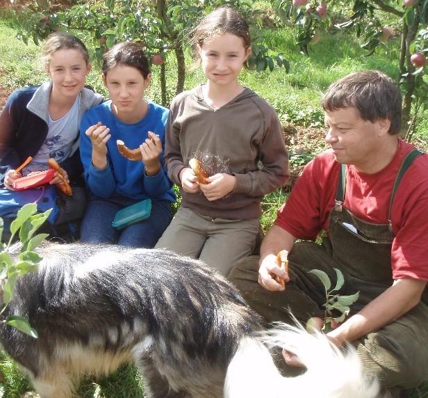 Freie Apfelernte