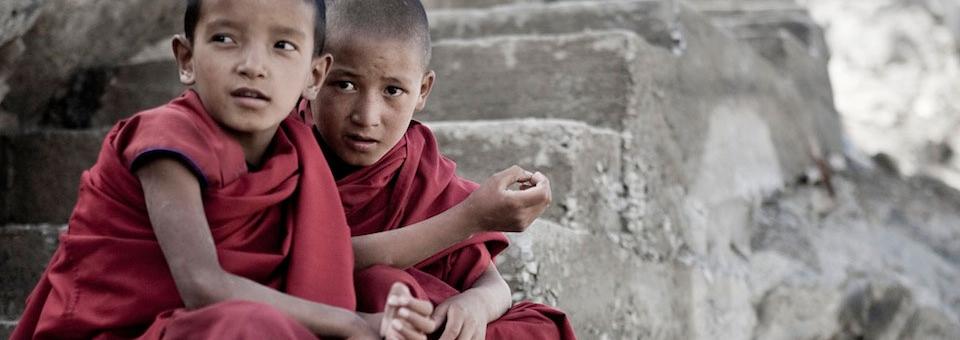 schooling the world - Titelbild