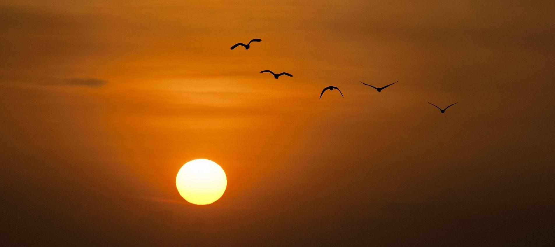 sunset-600095_19202