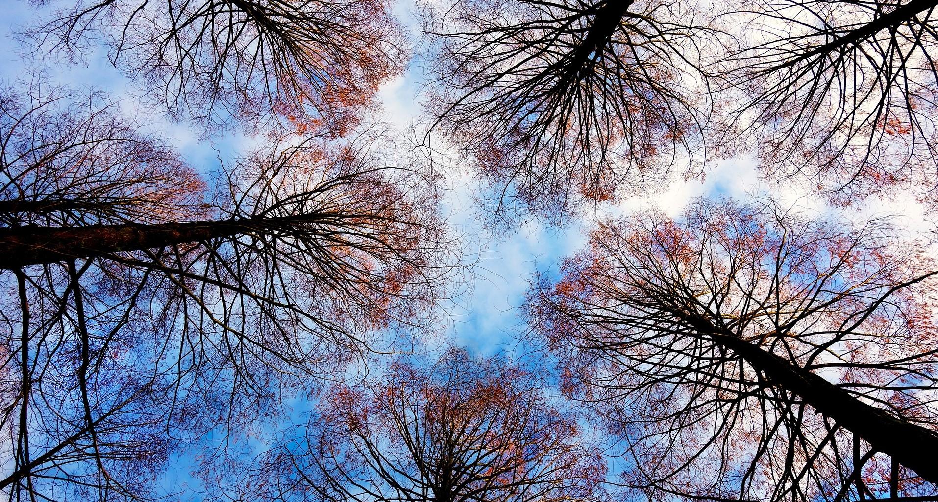 tree-tops-2991743_19202
